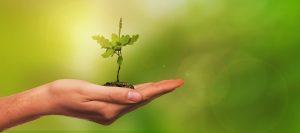 Aktion | Baum pflanzen @ Offerbachpark (Pavillon)